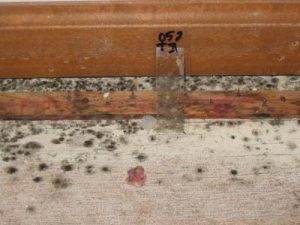 Mold Surface Sample Confirms mold presence and identified toxic mold.